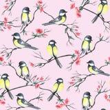 Άνευ ραφής σχέδιο με τα πουλιά watercolor που κάθονται τους κλάδους με τα λουλούδια διανυσματική απεικόνιση