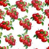 Άνευ ραφής σχέδιο με χρωματισμένα τα watercolor μήλα διανυσματική απεικόνιση