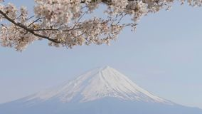 Άνθος κερασιών στον αέρα με το βουνό του Φούτζι φιλμ μικρού μήκους