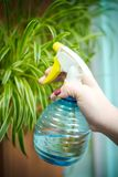 Άνθρωποι, κηπουρική, φύτευση λουλουδιών και έννοια επαγγέλματος - κλείστε επάνω, τα χέρια της γυναίκας ή του κηπουρού δίνουν το ψ στοκ φωτογραφία με δικαίωμα ελεύθερης χρήσης
