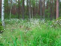 Άσπρα wildflowers στο δασικό, φυσικό υπόβαθρο στοκ φωτογραφία με δικαίωμα ελεύθερης χρήσης
