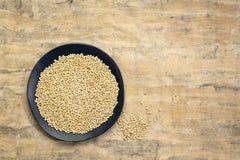 Άσπρο σιτάρι σόργου στοκ εικόνα με δικαίωμα ελεύθερης χρήσης