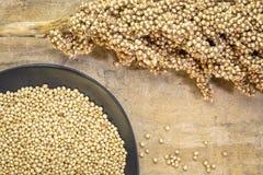 Άσπρο σιτάρι σόργου στοκ φωτογραφία με δικαίωμα ελεύθερης χρήσης