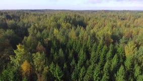 Άποψη κηφήνων του δάσους απόθεμα βίντεο