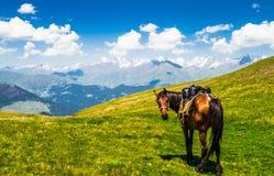 Άποψη σχετικά με το άλογο στο φυσικό τοπίο Tusehti, Γεωργία στοκ εικόνα