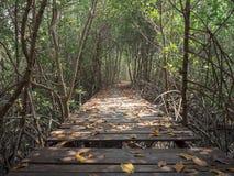 Άποψη της ξύλινης γέφυρας στο δάσος μαγγροβίων, Phetchaburi, Ταϊλάνδη στοκ εικόνα