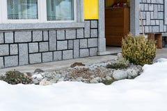 Άποψη του σπιτιού και του αλπικού λόφου με το euonymus που εμφανίζεται από κάτω από το χιόνι στοκ εικόνα