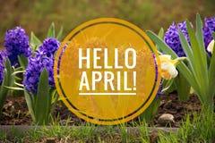 Έμβλημα γειά σου Απρίλιος Γεια άνοιξη Γειά σου Απρίλιος Ευπρόσδεκτη κάρτα περιμένουμε το νέο μήνα άνοιξη Ο δεύτερος μήνας της άνο στοκ εικόνες
