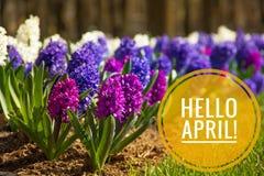 Έμβλημα γειά σου Απρίλιος Γεια άνοιξη Γειά σου Απρίλιος Ευπρόσδεκτη κάρτα περιμένουμε το νέο μήνα άνοιξη Ο δεύτερος μήνας της άνο στοκ φωτογραφίες