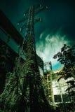 Ένας ψηλός τηλεφωνικός πύργος στοκ εικόνες