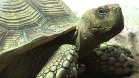 Ένα ερπετό χελωνών άγριας φύσης απόθεμα βίντεο