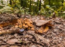 Ένα κάστανο κοντά σε μια δέσμη των μανιταριών σε ένα δάσος στοκ εικόνα με δικαίωμα ελεύθερης χρήσης