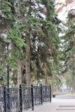 Ένα καλό μέρος για να είναι μόνος με τις σκέψεις σας την πρώιμη άνοιξη τρόπος πάρκων πόλεων στοκ εικόνες