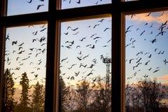 Ένα κοπάδι των πουλιών έξω από το παράθυρο στοκ εικόνα με δικαίωμα ελεύθερης χρήσης