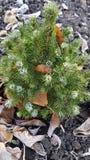 ένα λίγο χριστουγεννιάτικο δέντρο στο κρύο στοκ εικόνες με δικαίωμα ελεύθερης χρήσης