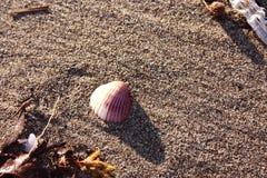 Ένα μικρό ενιαίο κοχύλι που φέρεται στην ακτή από το ρεύμα της θάλασσας στοκ εικόνες