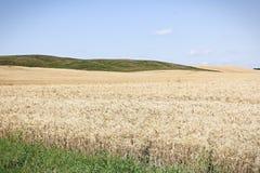 Ένα τοπίο των πράσινων λόφων και χλωμός μόλις στοκ εικόνα