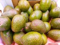 ένα χαρτονένιο κιβώτιο στην αφθονία αγοράς των νόστιμων λαμπρών πράσινων αβοκάντο συγκόμισε ακριβώς έτοιμο να πωληθεί στους πελάτ στοκ εικόνες με δικαίωμα ελεύθερης χρήσης