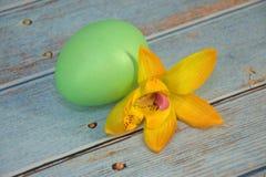 Ένα πράσινο αυγό Πάσχας και ένα λουλούδι βρίσκονται σε έναν ξύλινο πίνακα στοκ φωτογραφία με δικαίωμα ελεύθερης χρήσης