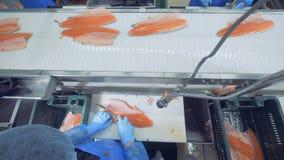 Ένα πρόσωπο κόβει τα πτερύγια σε ένα ψάρι, τοπ άποψη φιλμ μικρού μήκους