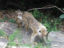Έξυπνοι πίθηκοι στοκ φωτογραφία με δικαίωμα ελεύθερης χρήσης