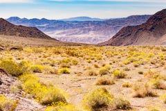 Έρημος λουλουδιών στο εθνικό ασβέστιο ΗΠΑ πάρκων κοιλάδων θανάτου στοκ εικόνα με δικαίωμα ελεύθερης χρήσης