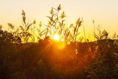 Ήλιος που αυξάνεται μέσω της σύγχυσης της βούρτσας παραλιών στοκ εικόνα με δικαίωμα ελεύθερης χρήσης