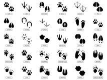 Ίχνη ζώων Τα ζωικά πόδια σκιαγραφιών, ίχνος βατράχων και κατοικίδια ζώα πληρώνουν το διανυσματικό σύνολο απεικόνισης τυπωμένων υλ διανυσματική απεικόνιση