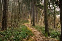 Ίχνος στα ξύλα κατά τη διάρκεια του φθινοπώρου Σλοβακία στοκ εικόνες με δικαίωμα ελεύθερης χρήσης