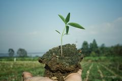 Αγαπήστε τον κόσμο ενώνει τα χέρια για να φυτεψει τα δέντρα για τον πλανήτη μας στοκ φωτογραφίες