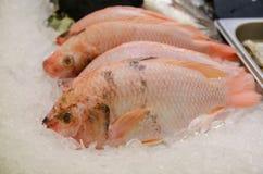 Ακατέργαστα Tilapia ψάρια για την πώληση στοκ φωτογραφία