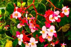 Ακμάζοντας εποχή λουλουδιών άνθησης την άνοιξη στον πολύβλαστο πράσινο κήπο στοκ φωτογραφία με δικαίωμα ελεύθερης χρήσης