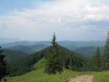 Αλπικό δάσος στοκ εικόνες με δικαίωμα ελεύθερης χρήσης
