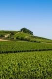 Αμπελώνες, ST Emilion, περιοχή του Μπορντώ, της Γαλλίας στοκ εικόνα με δικαίωμα ελεύθερης χρήσης