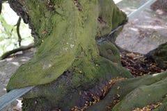 Ανάπτυξη δέντρων στη ράγα σιδήρου που καλύπτεται με το βρύο στοκ εικόνες