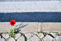 Ανάπτυξη του λουλουδιού μεταξύ του πεζοδρομίου και του δρόμου στοκ εικόνες