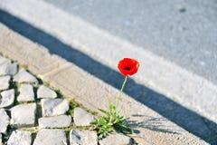 Ανάπτυξη του λουλουδιού στο δρόμο στοκ εικόνες