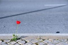 Ανάπτυξη των εγκαταστάσεων στο δρόμο ασφάλτου στοκ εικόνα