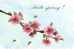 Ανθίζοντας κεράσι και μέλισσα στην έγχρωμη εικονογράφηση απεικόνιση αποθεμάτων