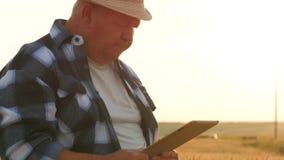 Ανώτερος αγρότης που στέκεται σε έναν τομέα σίτου με μια ταμπλέτα Αρσενικός αγρότης γεωπόνων με τον ψηφιακό υπολογιστή ταμπλετών  φιλμ μικρού μήκους