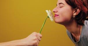 Αρσενικό χέρι που κρατά ένα λουλούδι στο κέντρο του πλαισίου Το κορίτσι ρουθουνίζει ένα λουλούδι σε ένα κίτρινο υπόβαθρο στο στού φιλμ μικρού μήκους