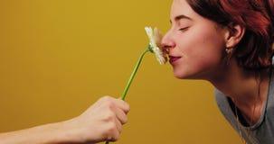Αρσενικό χέρι που κρατά ένα λουλούδι στο κέντρο του πλαισίου Το κορίτσι ρουθουνίζει ένα λουλούδι και και δέχεται ένα δώρο σε ένα  απόθεμα βίντεο