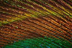 Αφηρημένη φωτογραφία ενός πολύχρωμου όμορφου φτερού peacock στοκ εικόνες