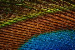 Αφηρημένη φωτογραφία ενός πολύχρωμου όμορφου φτερού peacock στοκ εικόνα με δικαίωμα ελεύθερης χρήσης