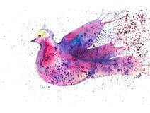 Αφηρημένο πολύχρωμο περιστέρι που περιβάλλεται από τις χρωματισμένες πτώσεις Απεικόνιση Watercolor που απομονώνεται στο άσπρο υπό ελεύθερη απεικόνιση δικαιώματος