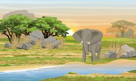 Αφρικανικός ελέφαντας σε μια θέση ποτίσματος Σαβάνα, ποταμός, μεγάλες πέτρες, βουνά και ένα δέντρο ακακιών διανυσματική απεικόνιση