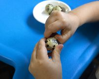 Αυγό μωρών και ορτυκιών στοκ εικόνες με δικαίωμα ελεύθερης χρήσης