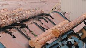 Αυτοματοποιημένος μεταφορέας σε ένα εργοστάσιο ξυλουργικής Ζώνη μεταφορέων στο σύγχρονο πριονιστήριο φιλμ μικρού μήκους