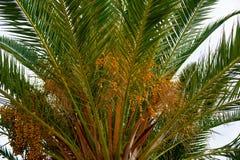 Αυτός ο όμορφος φοίνικας αυξάνεται στο Λα Palma στοκ φωτογραφία με δικαίωμα ελεύθερης χρήσης