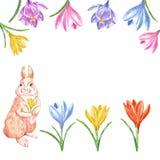 Απεικόνιση άνοιξη Watercolor με τα λουλούδια λαγουδάκι και κρόκων, που απομονώνονται στο άσπρο υπόβαθρο κάρτα Πάσχα απεικόνιση αποθεμάτων